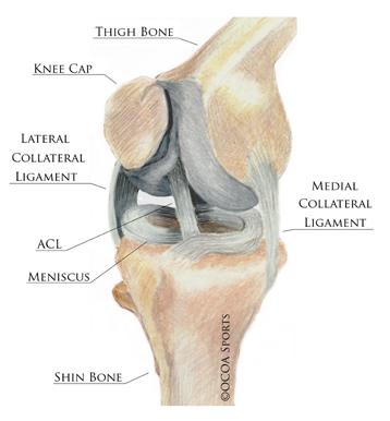 knee_parts.jpg