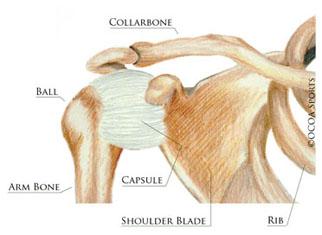 shoulder15.jpg